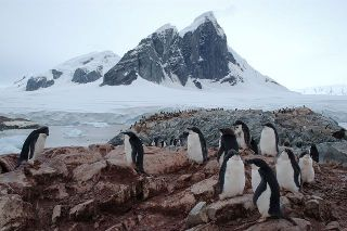 an Adelie penguin colony near Prospect Point