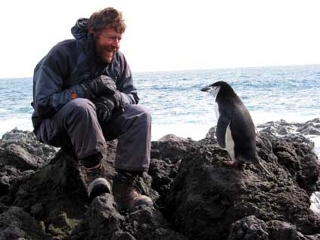 an inquisitive chinstrap penguin examines Gary