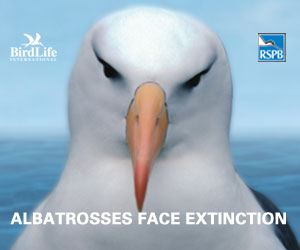 'save the albatross' logo