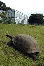 the governors mansion on St Helena with a giant tortoise in the 