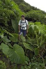 Gary admires the dense vegetation of St Helena's 